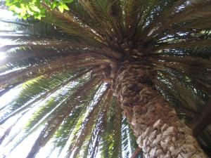 palm tree upview