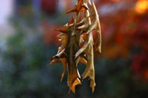 leaf in Fall 5